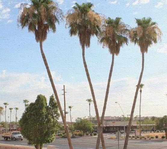 tn_about-us_palms2_495x555