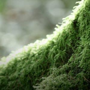Grass-Like